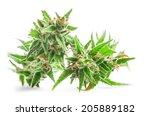 fresh medical marijuana... | Shutterstock . vector #205889182