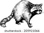 hand drawn raccoon | Shutterstock .eps vector #205921066