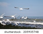 Seagulls Flying From The Shore