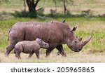 White rhinoceros or square...