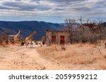 Giraffes In Mountainous Terrain ...