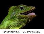 Closeup Head Of Green Lizard...
