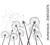 gray vector dandelions | Shutterstock .eps vector #206016376