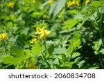 Close Shot Of Yellow Flowers Of ...