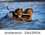 Two Labrador Retriever Dogs...