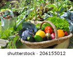 Basket Of Fresh Vegetables In ...