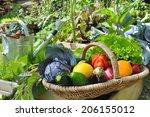 Basket Of Fresh Vegetables In ...