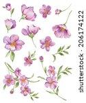 watercolor illustration flower... | Shutterstock . vector #206174122