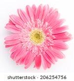 pink gerber a flower | Shutterstock . vector #206254756