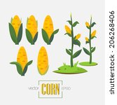 Corns And Corn Tree   Vector...