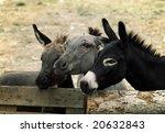Few cute donkeys on a farm