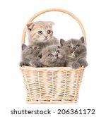 Little Kittens In Basket...