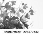 Blooming Jasmine. Black And...