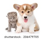 Stock photo cat and puppy sitting in front and looking at camera isolated on white background 206479705