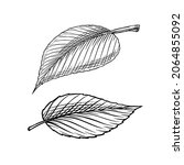 green leave or plant. vector...   Shutterstock .eps vector #2064855092