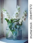 white matthiola flowers in... | Shutterstock . vector #206497372
