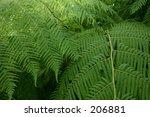 fern | Shutterstock . vector #206881