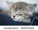 Stock photo kitten on owner 206929666