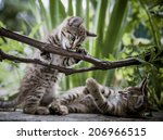 Stock photo playful kittens in a bush vine 206966515