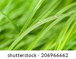 fresh green grass with water... | Shutterstock . vector #206966662