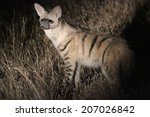 Small photo of An Aardwolf in the dark, standing erect in a pool of light, Namibia, Africa