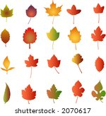 autumn leaves    vector... | Shutterstock .eps vector #2070617