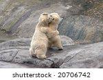 the small polar bears  on stones | Shutterstock . vector #20706742