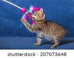 Stock photo cute kitten 207073648