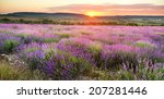 meadow of lavender. nature... | Shutterstock . vector #207281446