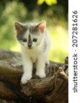 Stock photo gray cute kitten standing on the tree stump 207281626