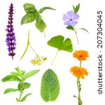 collage of healing herbs ...   Shutterstock . vector #207304045