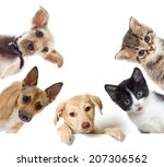 Stock photo set pet looks 207306562