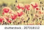 poppy flowers in summer colors | Shutterstock . vector #207318112