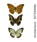 isolated butterfly | Shutterstock . vector #207334486