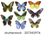 isolated butterfly | Shutterstock . vector #207342976