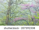 Landscape Of A Spring Forest In ...