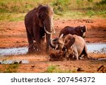 African Elephants In Mud Hole