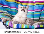 Stock photo lounger cat 207477568