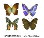 isolated butterfly | Shutterstock . vector #207638062