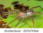 spider perched on a lotus leaf  ... | Shutterstock . vector #207674566