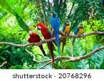 Red And Blue Macaw Resting On...