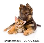 Stock photo cute puppy embracing little kitten isolated on white background 207725338