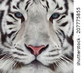 face of white bengal tiger.... | Shutterstock . vector #207775855