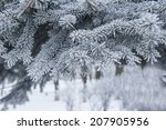 Snow Covered Pine Tree Branche...