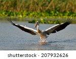 pelican in natural habitat   Shutterstock . vector #207932626