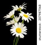 White Daisy Flower Against...