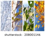 Birch Tree And Foliage At...
