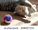 Stock photo gray cat plays with a toy 208007152
