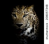 close up leopard portrait | Shutterstock . vector #208057348