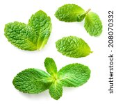 Small photo of Fresh mint leaves isolated on white background. Collection